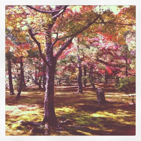 Bosque con Momiji - Koyo
